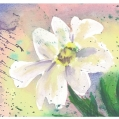 Untitled watercolour painting of a flower  by Sue Walker